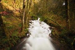 brud- falls skyler Royaltyfria Foton