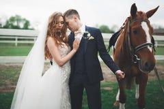 Brud och brudgum i skog med hästar binder crystal smycken för parcravaten bröllop Härlig stående i natur royaltyfri bild
