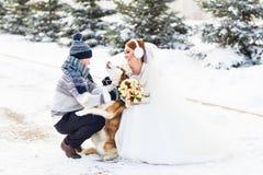 Brud och brudgum med hundHuskies i vinter royaltyfri fotografi
