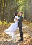 Brud och brudgum som går i höstpinjeskog arkivfoto