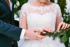 Brud` s och händer för brudgum` s bredvid den gröna prydliga filialen brudbrudgum som gifta sig utomhus vinter utomhus fotografering för bildbyråer