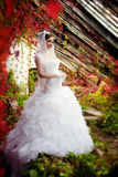 Brud som poserar på bakgrunden av blommor Royaltyfria Bilder