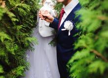 Bruden och brudgummen går i parkerar handen - i - handen royaltyfri fotografi