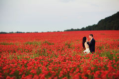 Bruden och brudgummen i ett rött vallmofält Arkivfoto