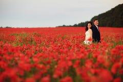 Bruden och brudgummen i ett vallmofält Fotografering för Bildbyråer
