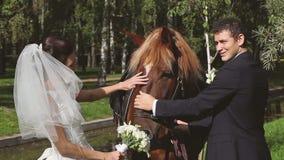 Bruden och brudgummen på ett bröllop går med hästen stock video
