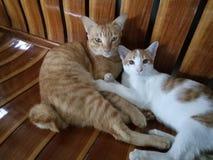 Bruder Cats stockbild
