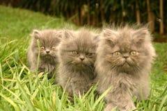 Bruder mit drei Kätzchen Stockfoto