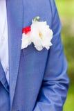 Brudgum Royaltyfria Bilder