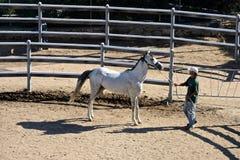 Brudgum med den vita fullblods- arabiska hästen royaltyfri foto