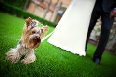 Brudgum och brud under bröllopceremoni, upp på händer Gifta sig par och en hund Arkivbild