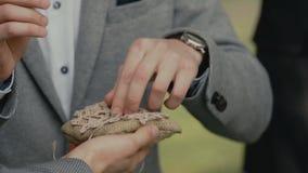 Brudgummen bär cirkeln på fingret av bruden stock video