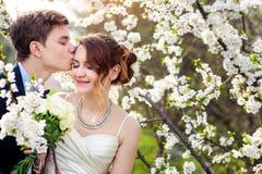 Brudgummen kysser bruden på en bakgrund av blommande träd royaltyfria bilder