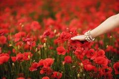 Brudhand som trycker på blommor i vallmofält Royaltyfria Bilder