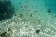 Brudna ocean woda Zdjęcia Royalty Free