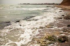 Brudna woda morska pełno gałęzatka Zdjęcie Stock