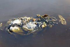 Brudni jałowi plastikowi worki na nawierzchniowej wodzie, Jałowi plastikowi worki nie Rozłożony śmieci, zanieczyszcza natury ekol obrazy royalty free