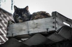 Brudny bezdomny kota obsiadanie w pudełku na dachu Obraz Royalty Free