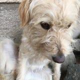 Brudny śliczny pies Zdjęcie Royalty Free