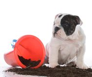 Brudny pies w błocie zdjęcie royalty free
