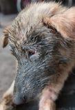 brudny psie Obrazy Royalty Free