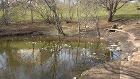 Brudny staw w parku zbiory wideo