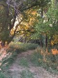 Brudu ślad Przez drzew Fotografia Royalty Free