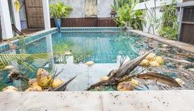 Brudzi pływackiego basenu, tropikalny basen, brudnego basenu woda Obrazy Royalty Free