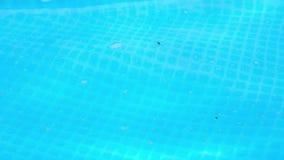 Brudzi wod? w P?ywackim basenie Mote, grat i insekty na powierzchni błękitne wody, zbiory