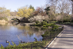 Brug in Central Park Stock Afbeelding