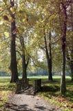 Brug in de herfstpark stock afbeelding