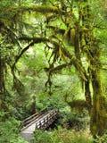 Brug en Sleep door Moss Covered Trees van Olympische Natio Stock Fotografie