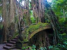 Brug in het bos van apen Royalty-vrije Stock Afbeeldingen