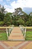 Brug in het park in Sotchi Royalty-vrije Stock Foto's