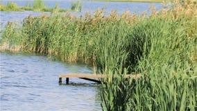 Brug op het meer in het riet stock footage