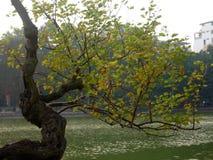Brug op Ho Hoan Kiem-meer in Hanoi stock afbeelding
