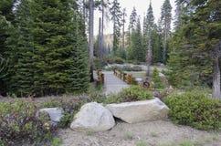 Brug in Sequoia nationaal park Stock Fotografie