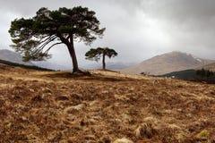 Brug van Orchy - Schotland Stock Afbeeldingen