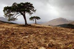 Brug van Orchy - Schotland Stock Foto's