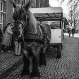 BRUGES, BÉLGICA - 17 DE JANEIRO DE 2016: Transportes puxados por cavalos o 17 de janeiro de 2016 em Bruges - Bélgica Fotografia de Stock Royalty Free