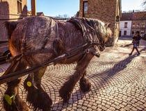 BRUGES, BÉLGICA - 17 DE JANEIRO DE 2016: Transportes puxados por cavalos o 17 de janeiro de 2016 em Bruges - Bélgica Foto de Stock Royalty Free