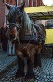 BRUGES, BÉLGICA - 17 DE JANEIRO DE 2016: Transportes puxados por cavalos o 17 de janeiro de 2016 em Bruges - Bélgica Fotos de Stock Royalty Free