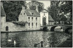 Bruges, Belgium. The swan place near beguinage. Swans swimming in the canal of Bruges ,Belgium near the Bruges` beguinage stock photo