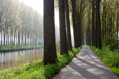 Bruges Canal. Trees lining a canal and cycle path in Bruges, Flanders, Belgium Royalty Free Stock Photography