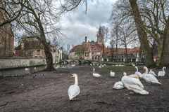 Bruges and swans Stock Photos
