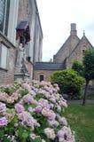 Brugge hortensi kwiaty Zdjęcia Stock