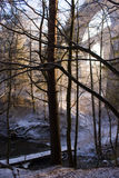 Bruggen in bos in Polen royalty-vrije stock afbeeldingen