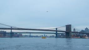 Bruggen in de Stad van New York Royalty-vrije Stock Foto