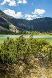 Brughiera che cresce da un lago Fotografia Stock
