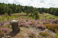 Brughiera della pianura con lo stagno di estate Fotografia Stock